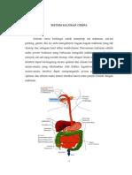 Anatomi Fisiologi Saluran Cerna