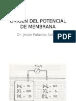 3 Origen Del Potencial de Membrana