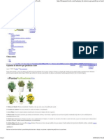 6 Plantas de Interior Que Purifican El Aire - Biorganic Foods