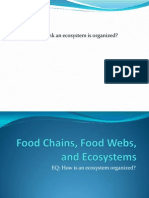 food chains food webs and ecosystems