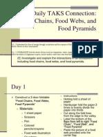 food chain web pyramid foldable