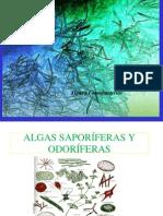 Algas y cianobacterias.pdf