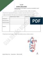 5 - Sistema Circulatorio 2013