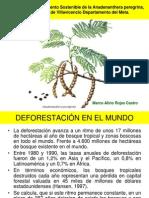 Manejo y Aprovechamiento Sostenible de La Anadenanthera Peregrina