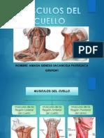 1.Musculos Del Cuello