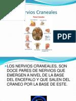 Anatomia Nervios Craneales III IV V