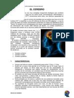 áreas  del cerebro -  trabajo - 1