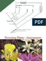 13-FloweringPls