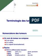 2_Terminologie_Buemi.pdf