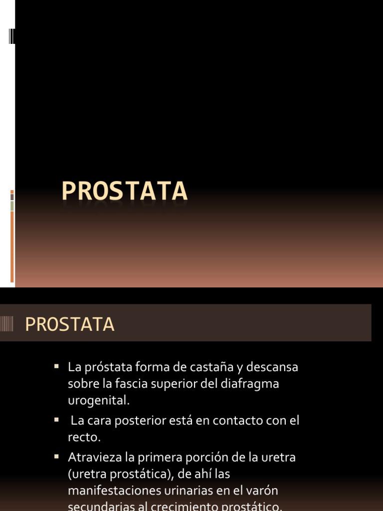 inervación de próstata pdf para