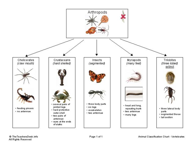 Animal Classification Chart Arthropods