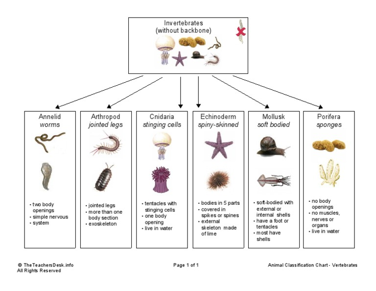 Animal Classification Chart - Invertebrates