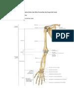 PBL skenario 1 blok Muskulo skeletal