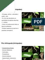 Aula-de-Artropodes-2ºano