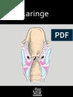 2012-04-06_laringe_