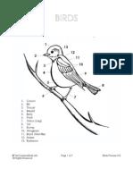 Birds Preview K-6