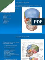 Anatomia de los Huesos de La Cara