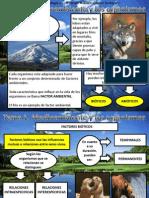 Tema 1 Medioambiente (II)