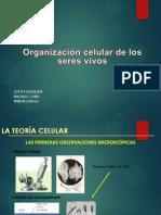 CELULAS BIOLOGIA