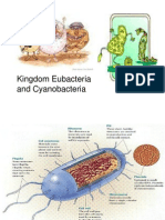Bacteria Fungi