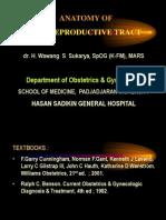 Slide Anatomi Panggul-1