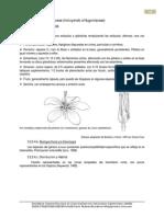 4-Linaceae