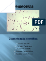 Clostridium Anaerobios