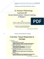 Basic Human Pathology - Lecture 5