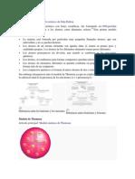 Programa de Quimica Desarrollo