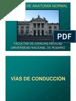 10 VÍAS DE CONDUCCIÓN