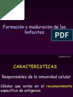 Linfocito T
