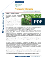 Nota Informativa 02_la Ciruela en La Libertad_feb_2013