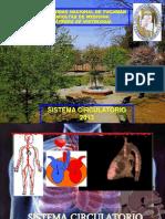 Aparato Circulatorio 2013 Parte 1
