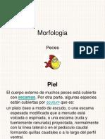 Peces-1210740541697998-9 Pescados Para El Informe