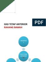 5-Gigi Tetap Anterior Rb