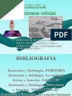 AnatoGralCélula3