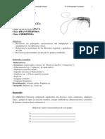 Tp 9 Crustacea