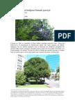 El Guaviyú (Myrcianthes pungens)