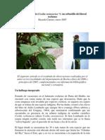 La Salvia Baguala (Cordia Curassavica - Un Arbustillo Del Litoral