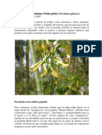 Palán palán (Nicotiana glauca)