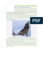 Fisiologia digestiva canina e felina básicas