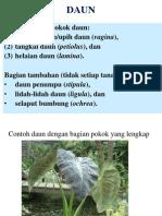 morfologi daun