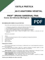Apostila Anatomia e Morfologia Vegetal - 2011