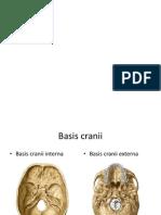 Basis Cranii