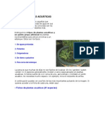 TIPOS DE PLANTAS ACUÁTICAS.docx