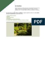 Plantación de Plantas Acuáticas.docx