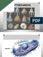 protozooarios-clase1azoología2013.pptx