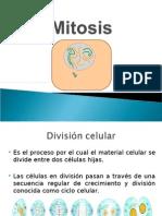 Mitosis Clase - Copia