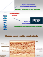 HistologíaRespiratoria
