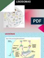 lisosomas2